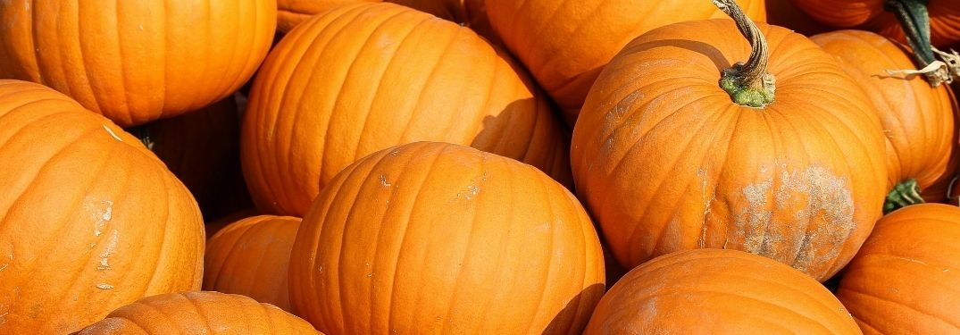 Where can I pick my own pumpkin near Elgin, IL?