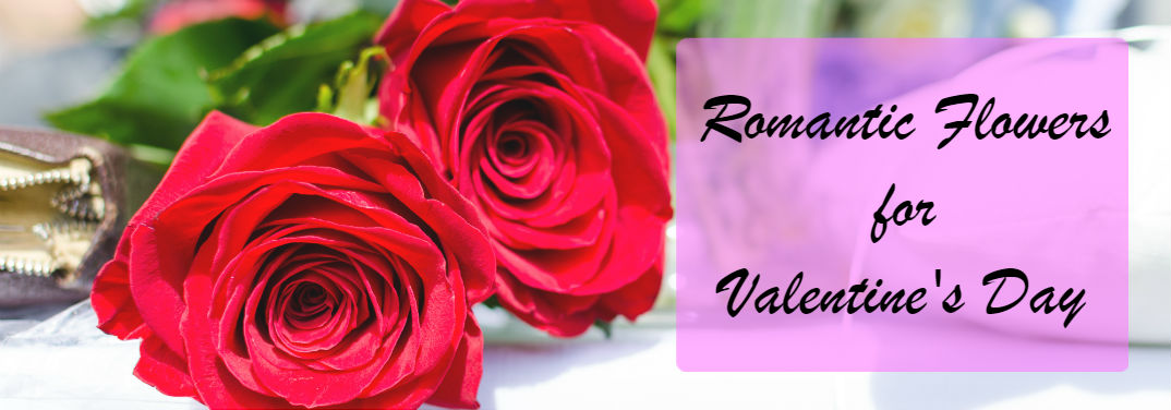 Romantic Flowers for Valentine\'s Day Besides Roses - Hickory Mazda