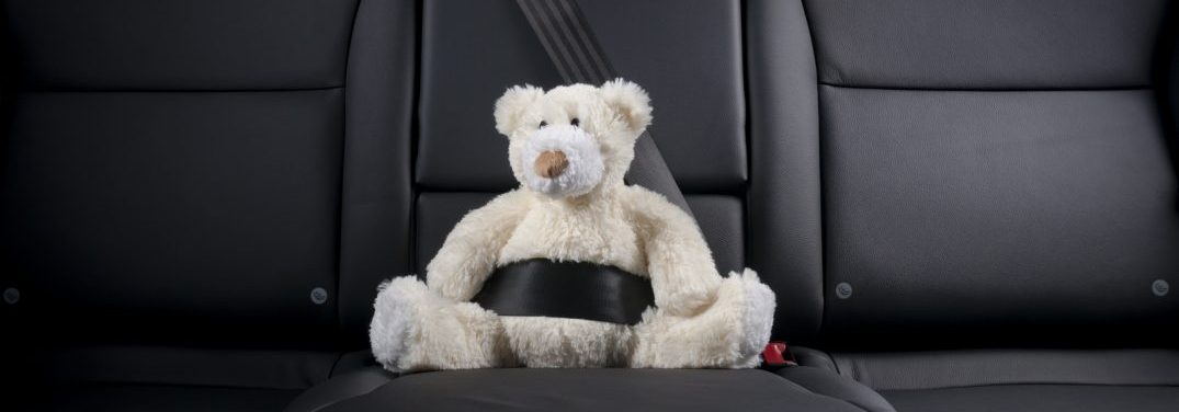 teddy bear buckled into back seat