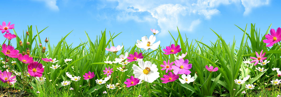 Vibrant flowers and grass underneath a blue sky.
