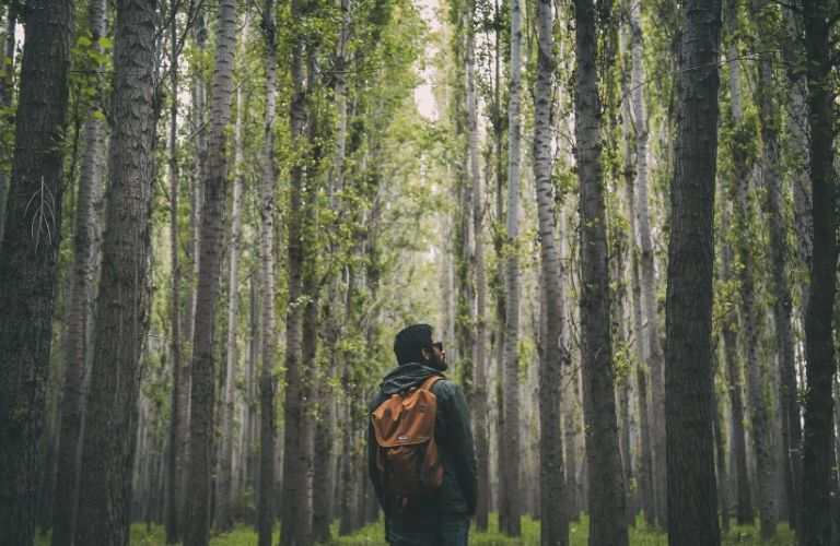 A man wearing a backpack gazes in wonder at the beautiful birch forest surrounding him (presumably near Chicago).