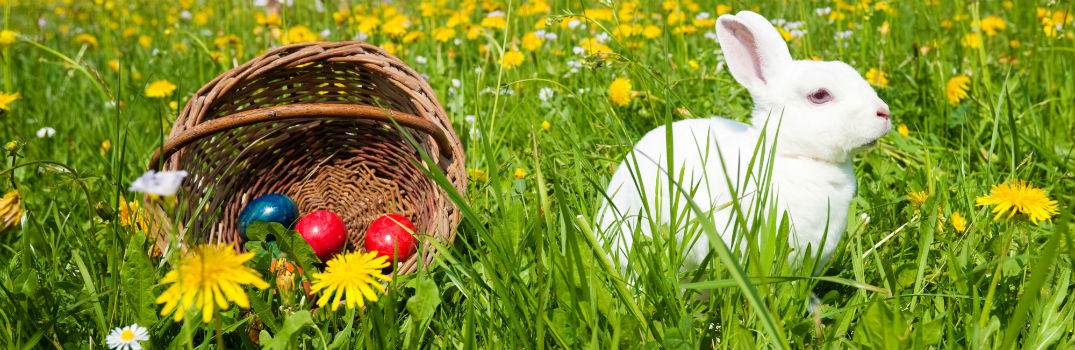Milwaukee has plenty of Easter Egg Hunts this year!