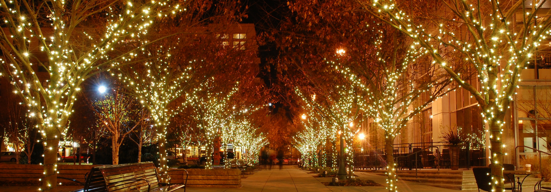 Trees in a plaza with Christmas lights