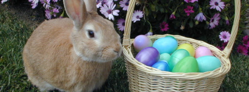 rabbit next to easter egg basket filled with eggs