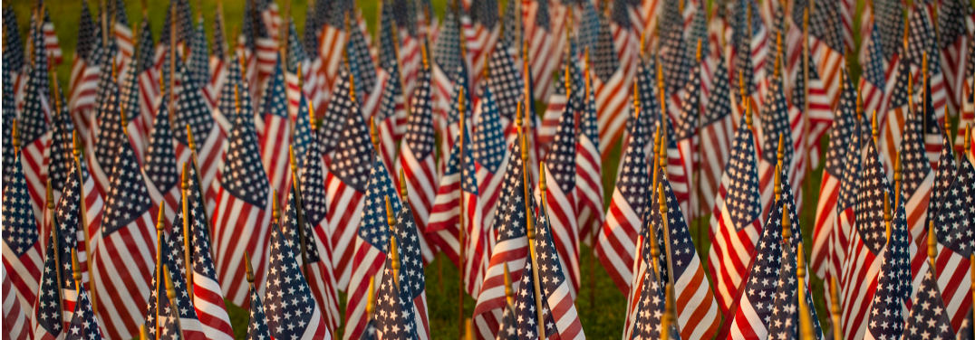 Many small flags are crowded together on a green lawn in the evening sun.