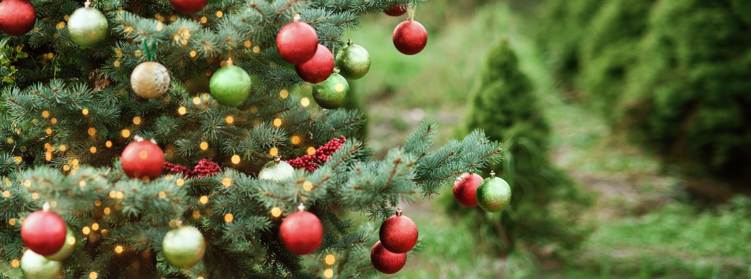 Where can I get Christmas Trees in Vermont's Capital Region?