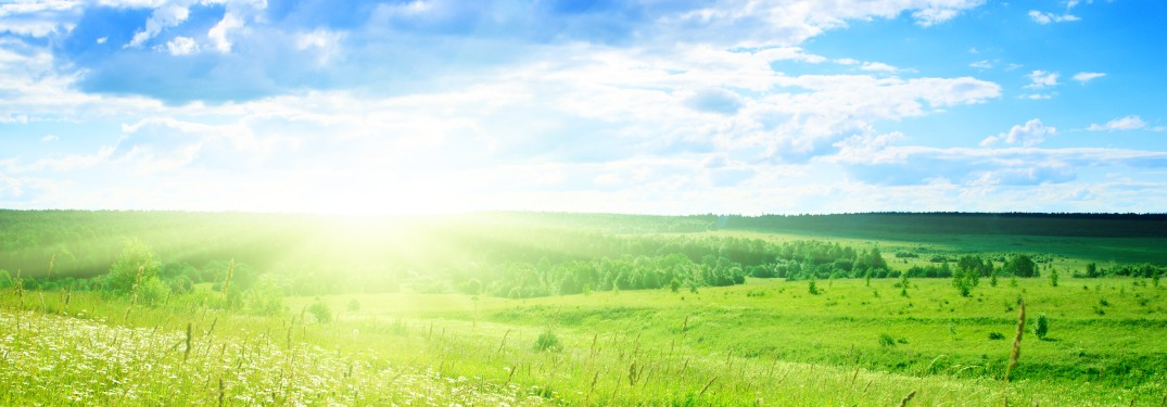 blue sky and green grass with sunrise