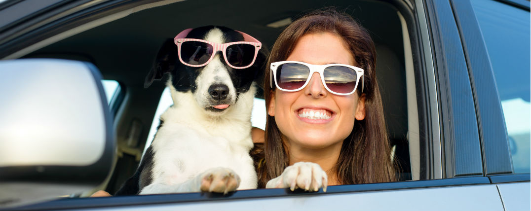 Safe travel with dogs