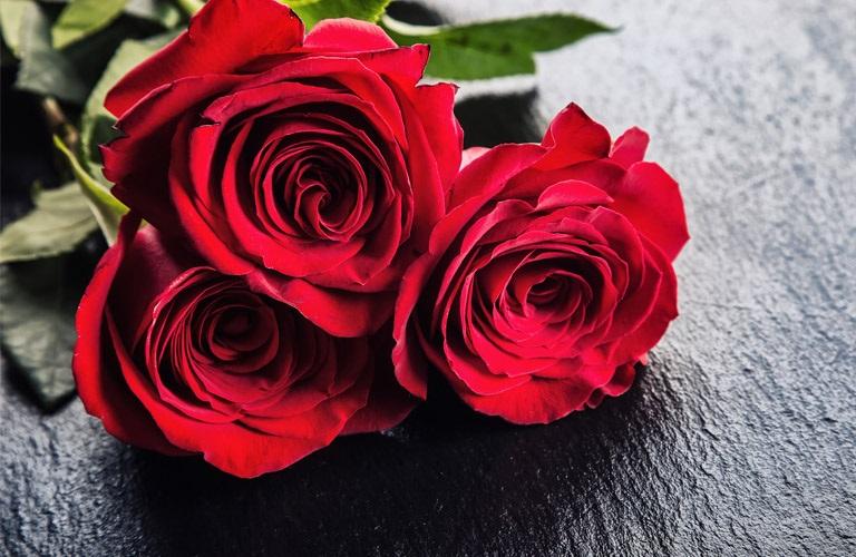 Three roses up close