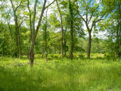 green summer woodlands