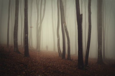 ghostly trees in foggy atmosphere