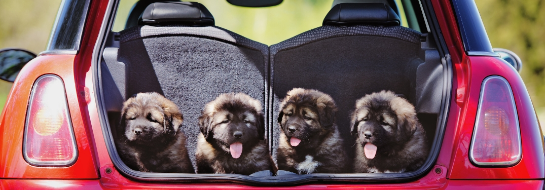 Traveling Hacks for Driving with a Dog