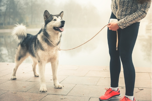 dog on leash going for a walk