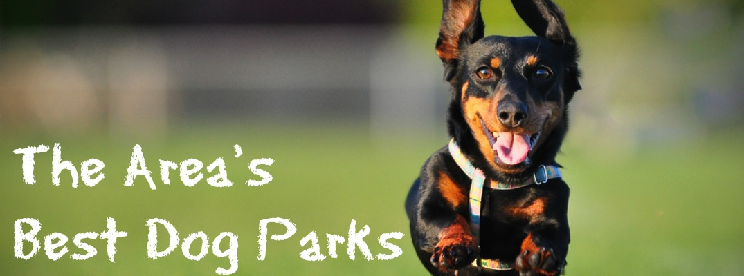 Dog Parks near Scranton PA