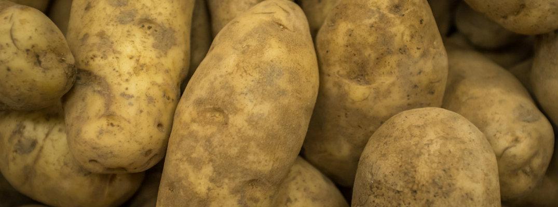 Close-up shot of Russet potatoes