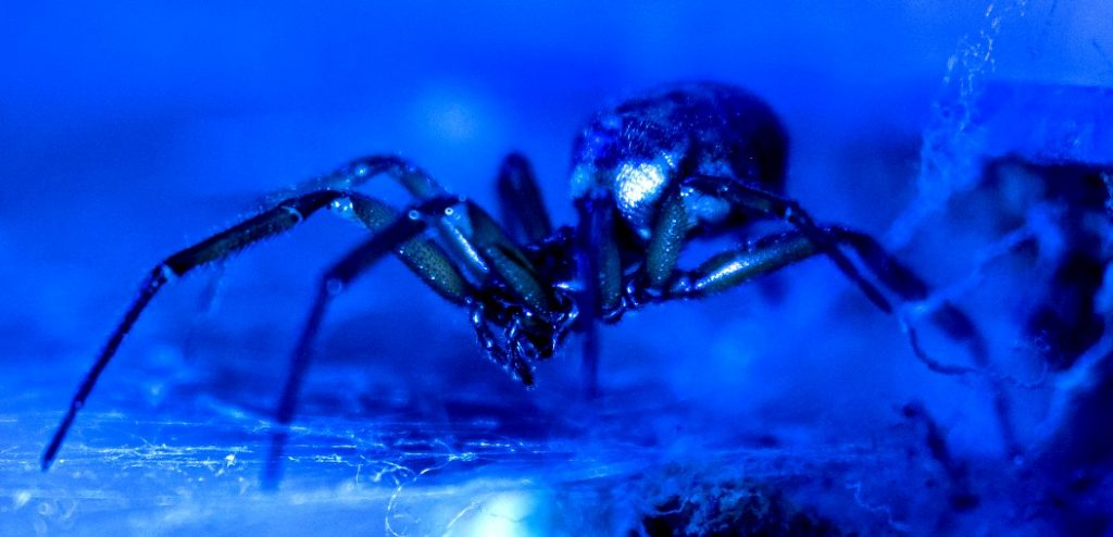 Blue-toned photo of a spider