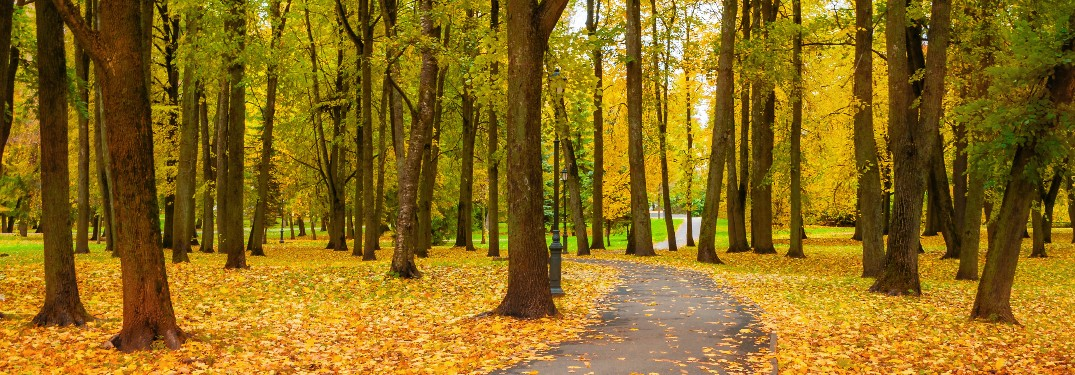 paved trail through trees with autumn leaves