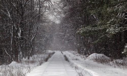 snowy railroad train track through forest