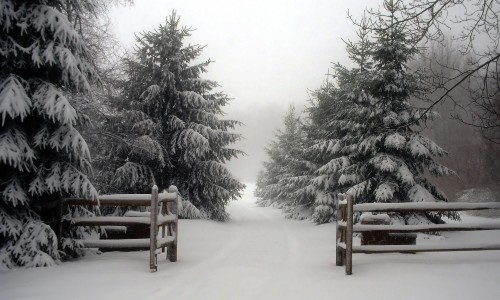 wood fence and snow covered evergreens
