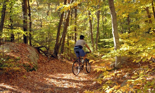 Person biking in the woods