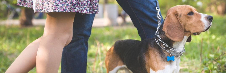 Dog Parks near Lehighton PA and the Surrounding Area