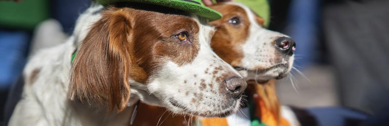 2021 St. Patrick's Day Events near Lehighton PA