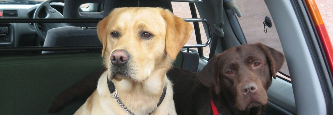 Two dogs featured in a blog post about pet safety driving tips