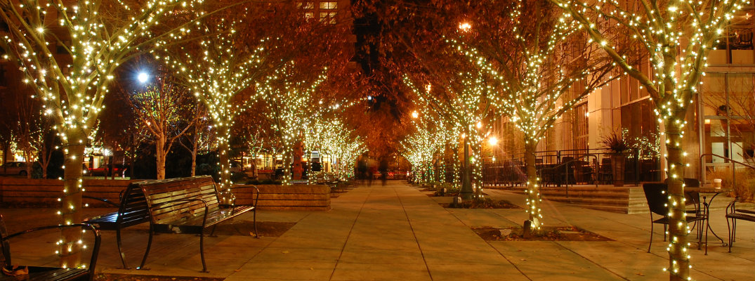 A line of tree with holiday lights