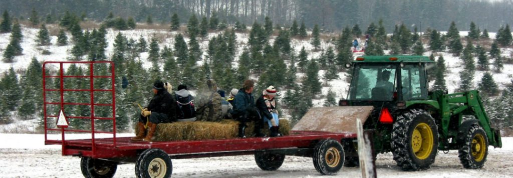 Cut-Your-Own Christmas Tree Farms near the Twin Cities
