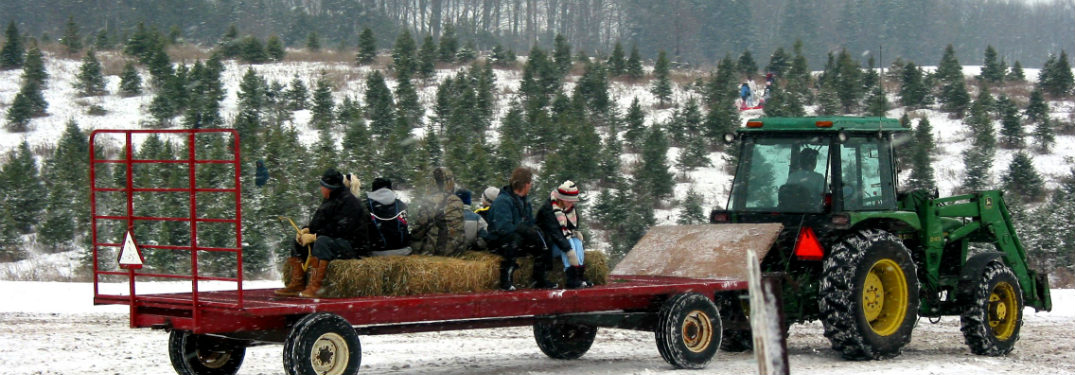 taking a tractor hayride into a Christmas tree farm