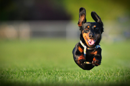 small dog running outside