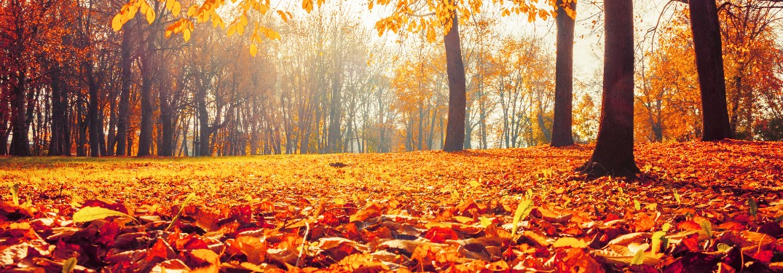 Fall Foliage and colorful leaves
