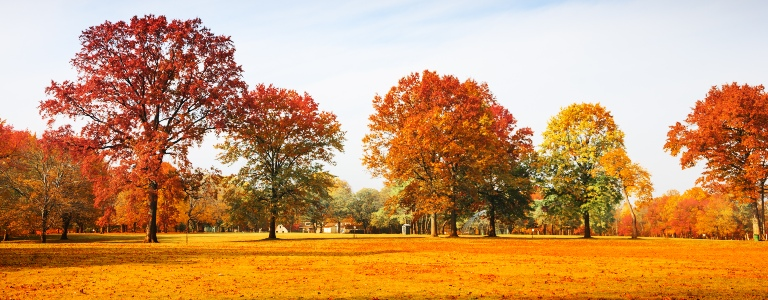 Trees Changing Colors