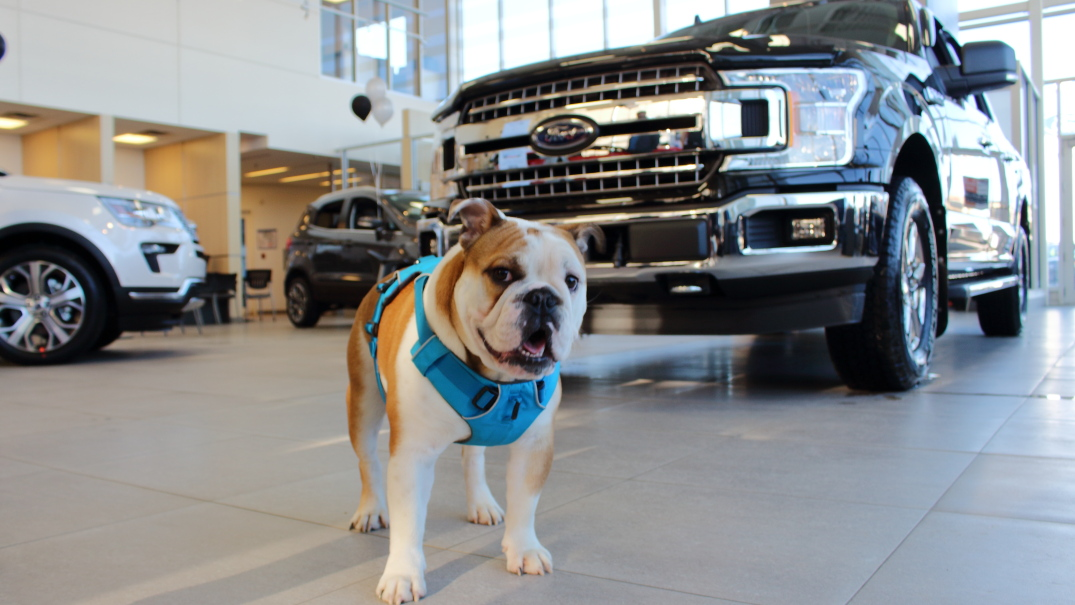 Drive One For Furry Friends