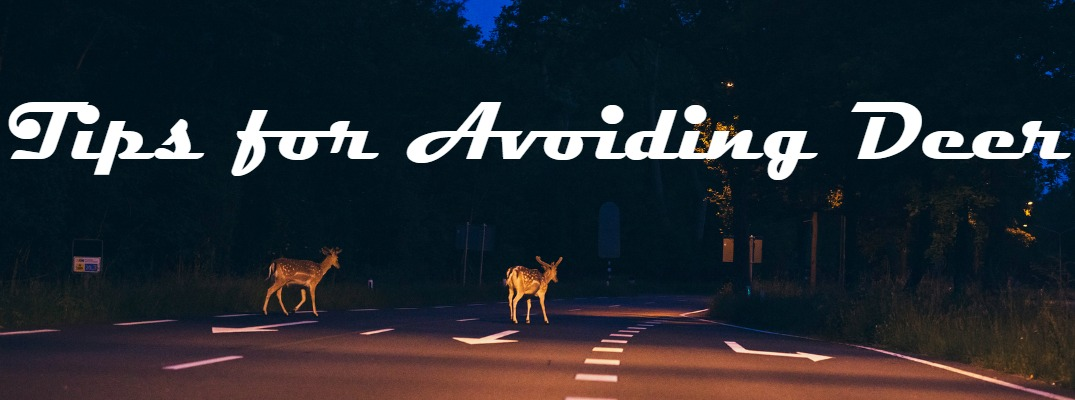 How to Avoid Hitting a Deer