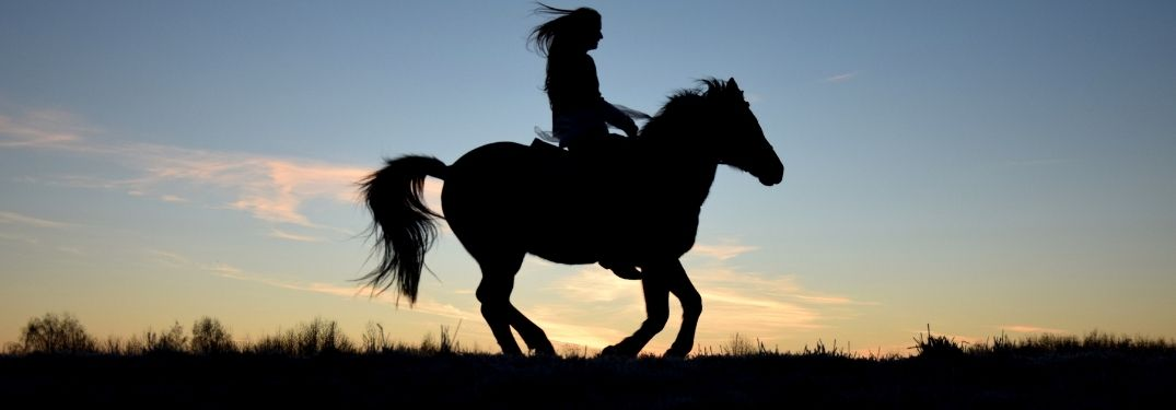 Silhouette of horse and rider on sunset