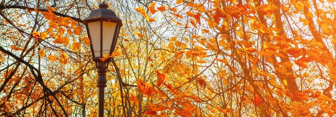 A lamp post surrounded by trees in fall.