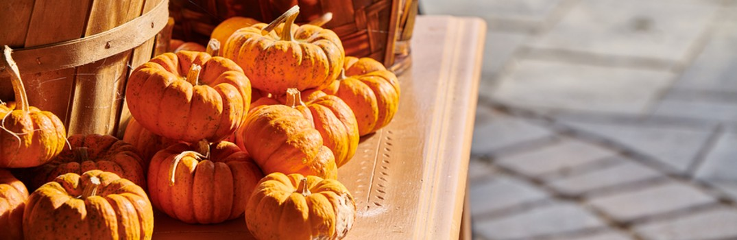 Fall 2019 pumpkin patches and farms near Harlingen to check out