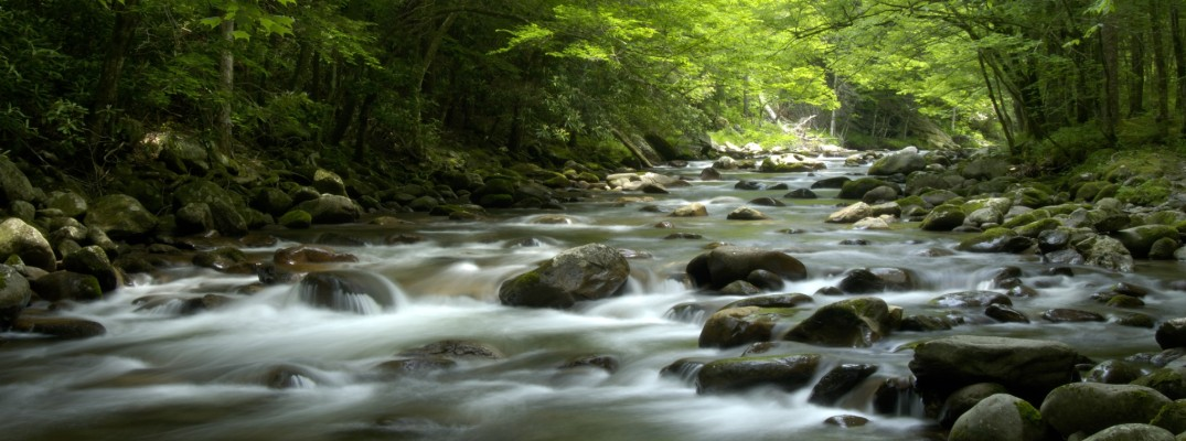 A river in the Great Smoky Mountains region in the USA
