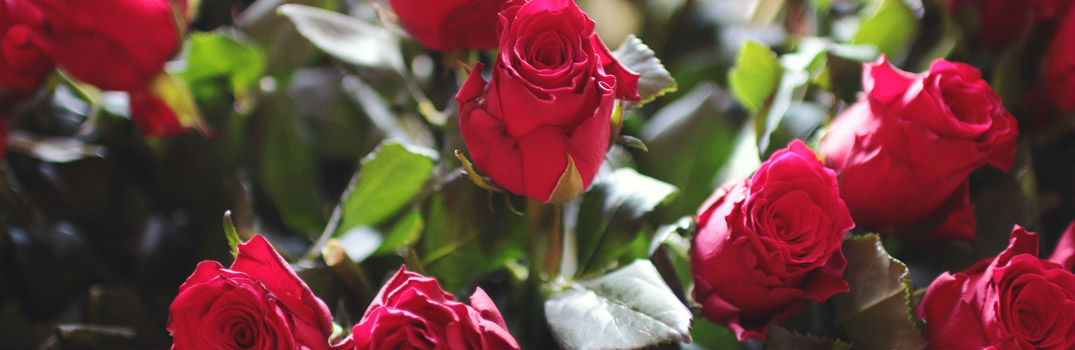 Valentines Day Red Roses