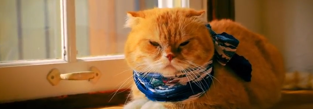 A yellow cat wearing a scarf