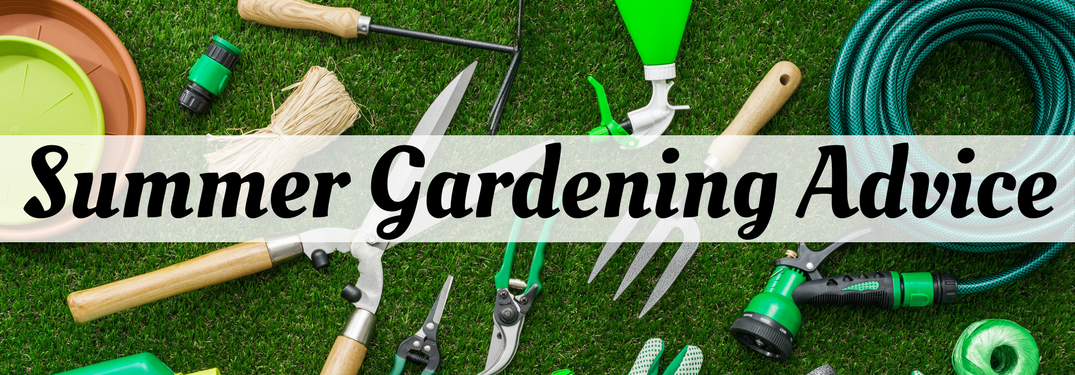 Summer gardening advice over various garden tools background