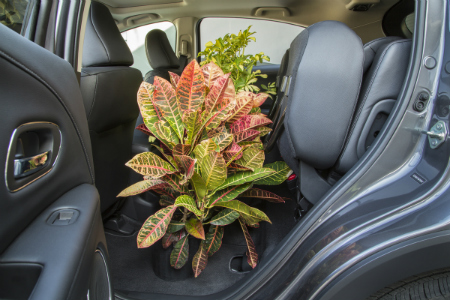 interior of 2018 honda hr-v with second-row folded up so tall plant can fit