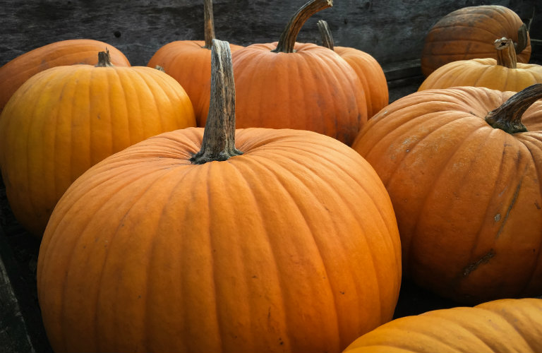 Where to pick a pumpkin in Portsmouth NH