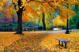Preparing Your Wheelchair Accessible Van for Fall