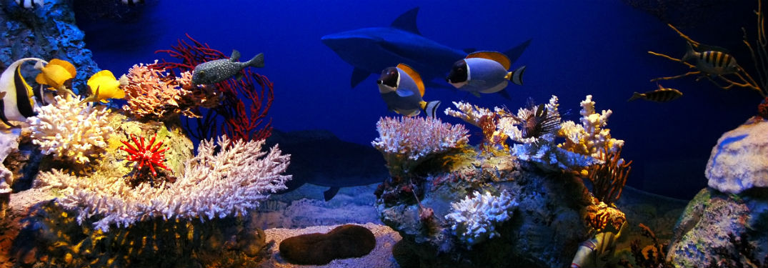 Underwater scene with fish coral and shark