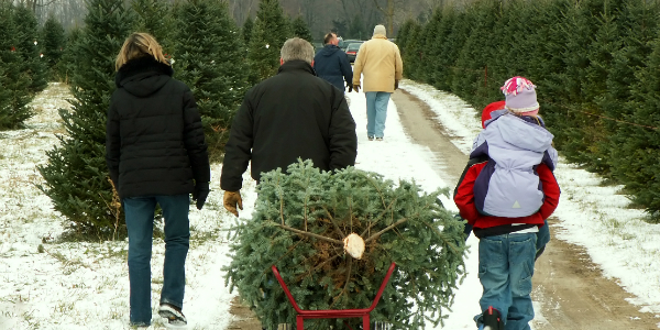 Family Bringing Christmas Tree to Their Car