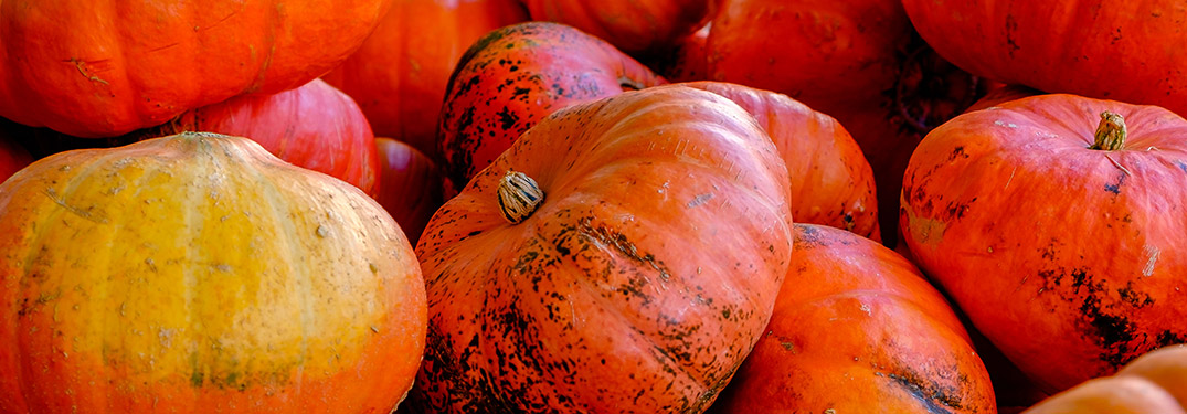 Best pumpkin patches in Wantagh, NY
