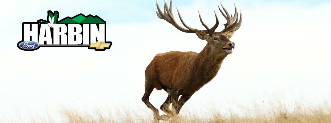 It's Back: The 8th Annual Harbin Auto Big Buck Contest