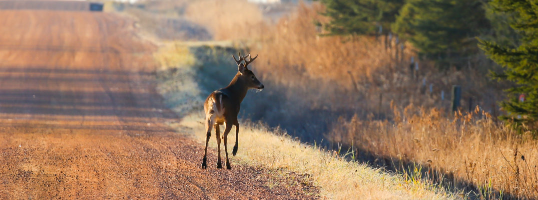 The Fall Season Means That You Could See More Wildlife on the Road